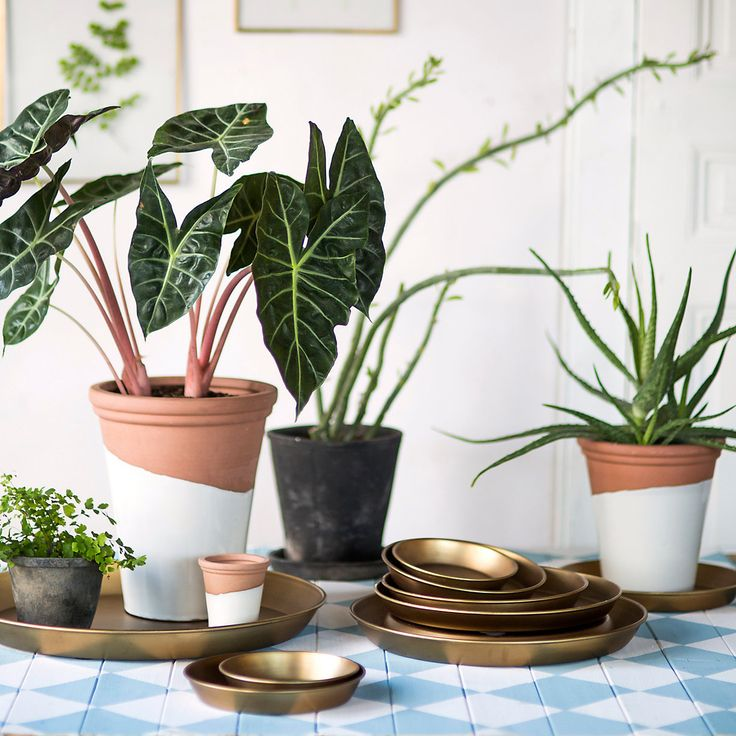 Pot Trays Gardening 45 best indoor gardens images on pinterest house plants indoor citrus taper pot workwithnaturefo
