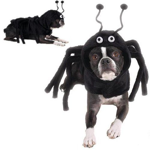 dog costume spidey paws dog spider halloween costume xs find out