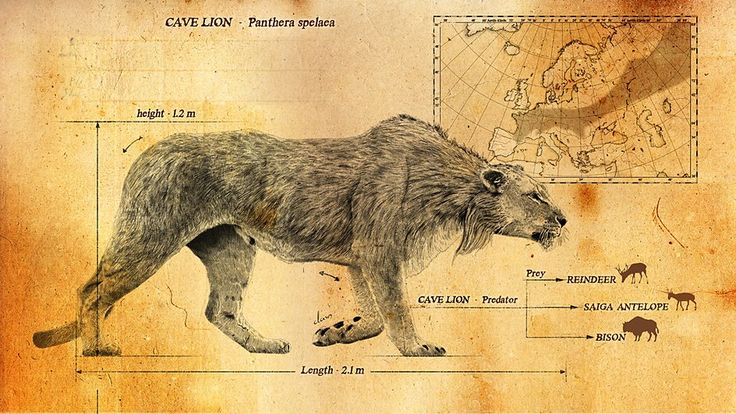 Cave Lion - Ice Age Giants