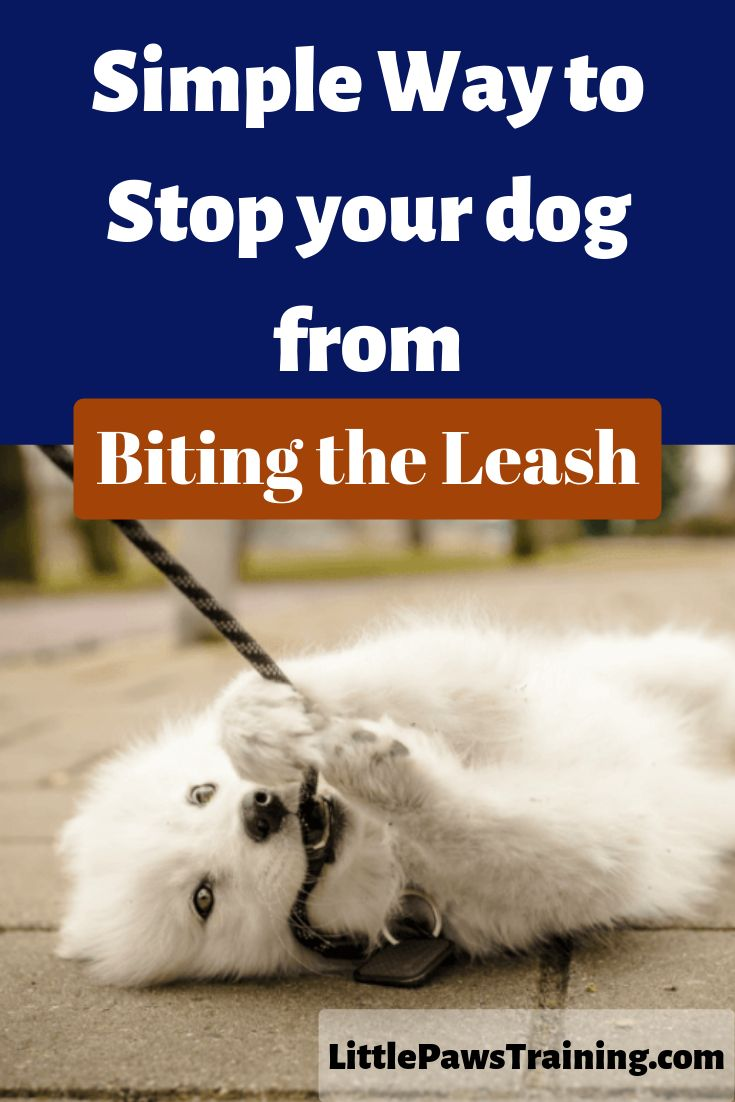 Here is a very easy way to stop any dog from biting the