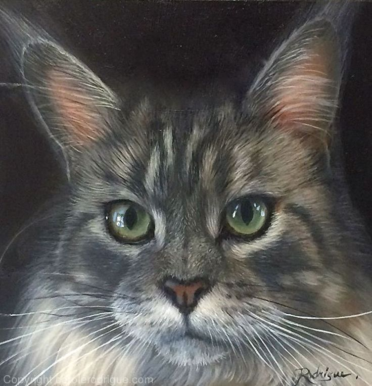 Skylar, Maine Coon by pet portrait artist Carole Rodrigue Oil ~ 6 x 6   #catpaintings #cats #catart #petportraits #petportraitartists #petportraitsCanada #realisticcatpaintings #catlovers  #felineart