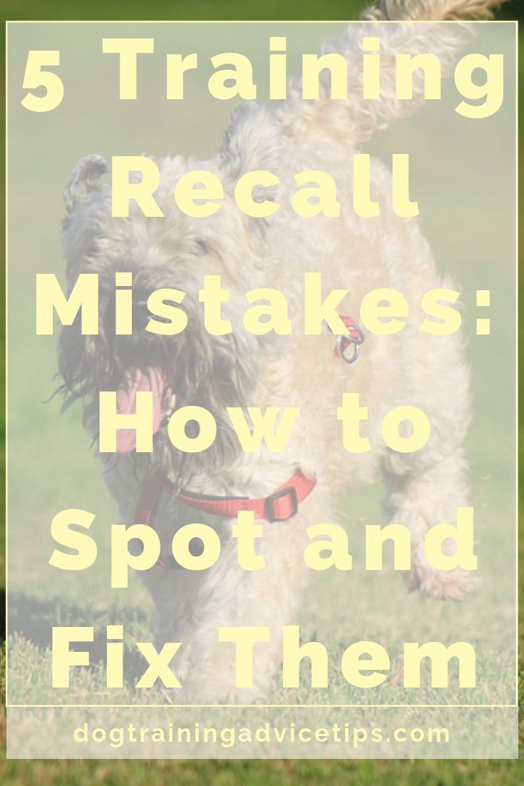 5 Training Recall Mistakes How To Spot And Fix Them Dog