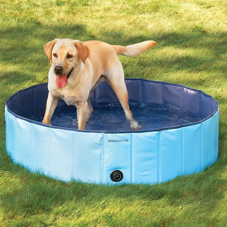 The Canine Splash Pool made to withstand dogs & their claws - Hammacher Schlemmer