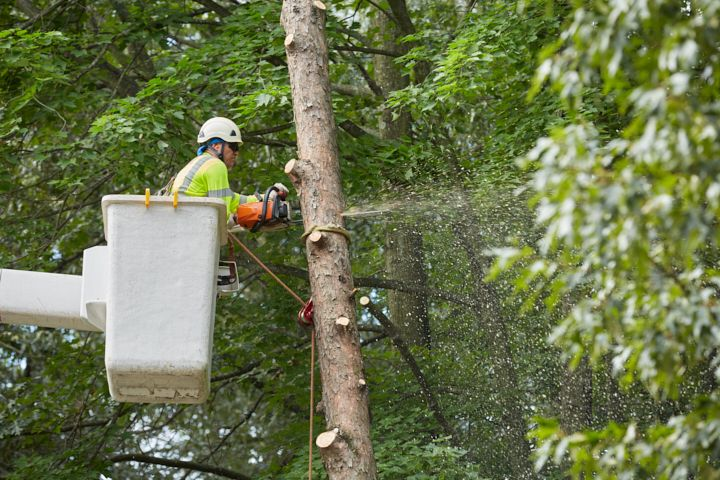 Tree Care Services Philadelphia PA