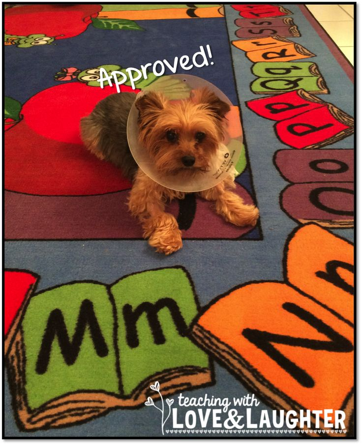 17 Best Ideas About Classroom Carpets On Pinterest