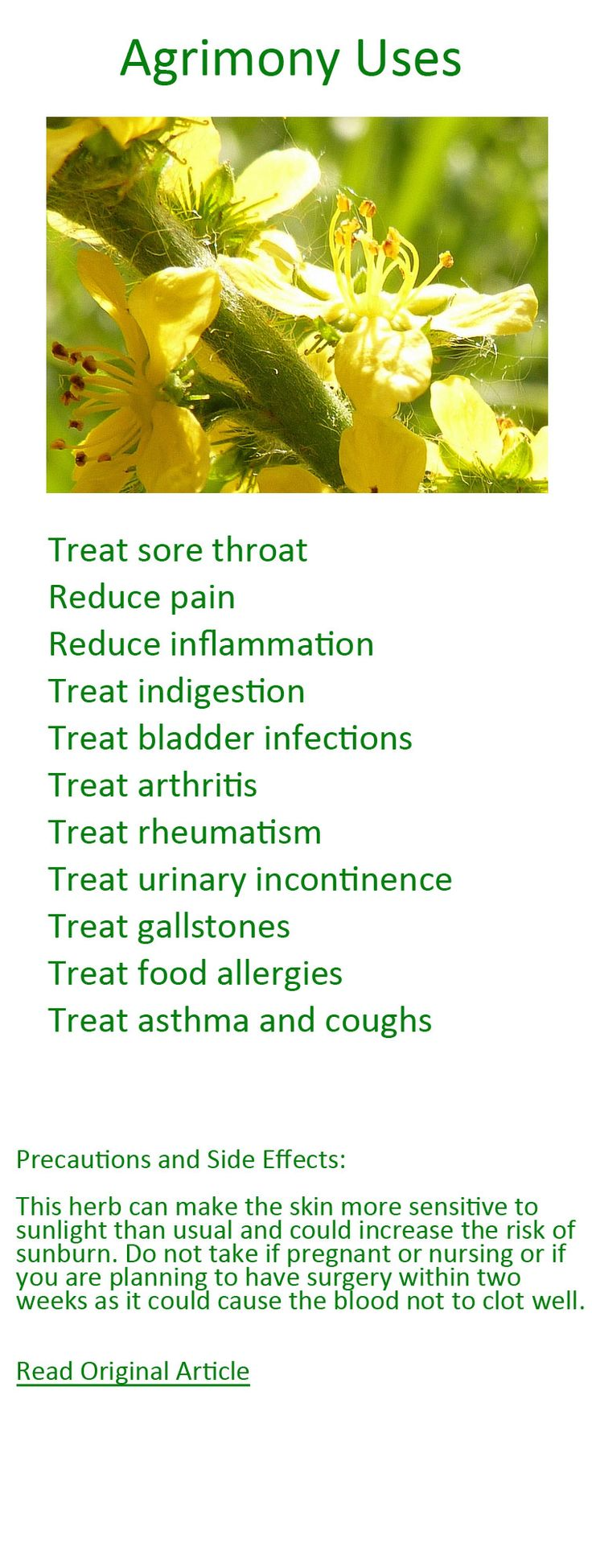 Discover the many health benefits of Agrimony.