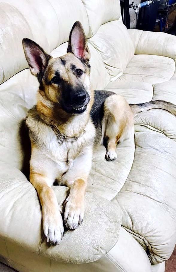 Junkyard Jam to Benefit Local Dog Rescues at The Sahara Lounge Saturday, Jan. 20