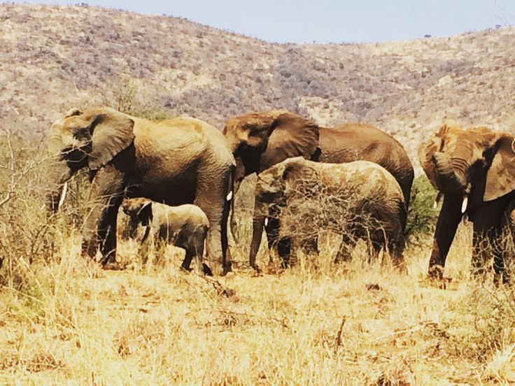 #Pilanesberg #travel #game