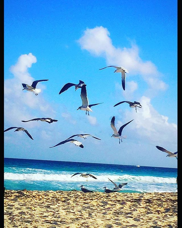 this is how a good day looks like ! #alwayssummer #newyearsday #cancunnye2016 #cancun #mexico #beach  #tan  #sea #sand #photooftheday #caraibean