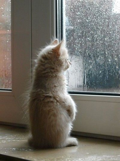 Watching the rain fall...