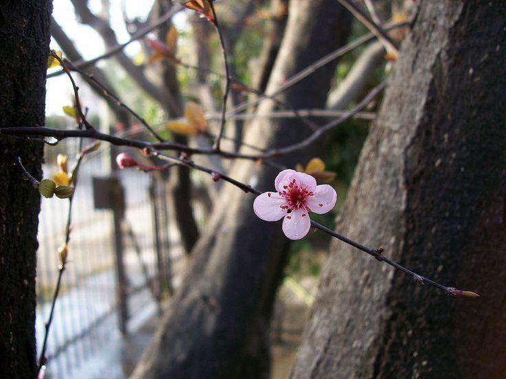 florecen en mi patio