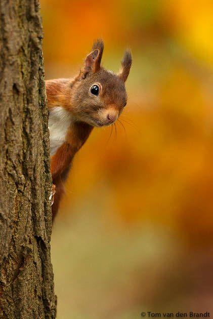 Wat staan er toch altijd leuke eekhoorns op Pinterest!