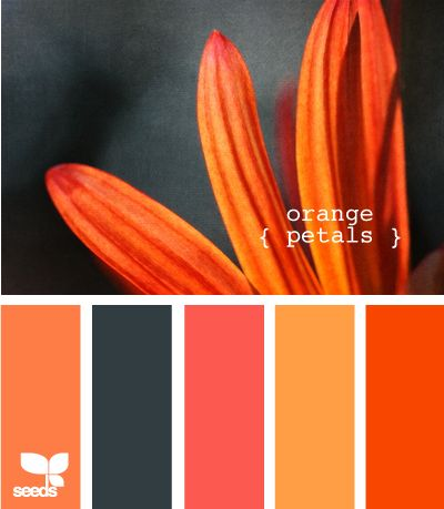 orange petals....@Teresa Henke Inabnit seen this and it reminded me of you...<3 this colors!!