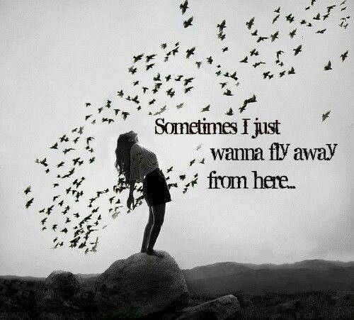 If i could fly..