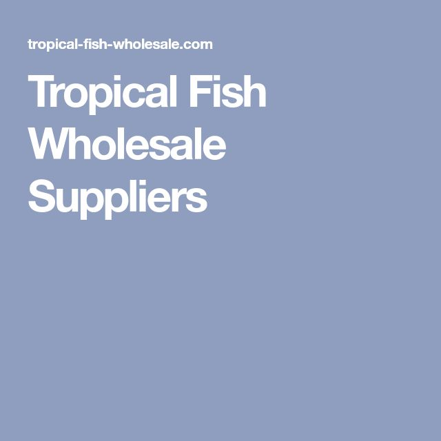 Tropical Fish Wholesale Suppliers