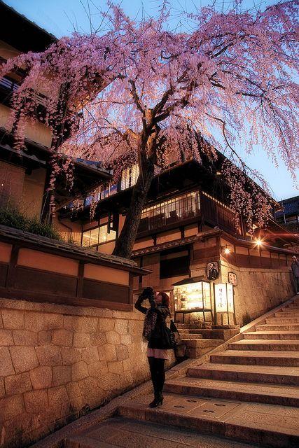 Cherry Blossom, Higashiyama, Kyoto, Japan