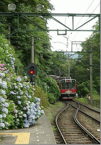 Hakone mountain railway in hydrangea season, Kanagawa, Japan 箱根登山鉄道
