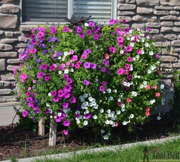 """Hou je van doe-het-zelf ideeën voor in de tuin? Ja? Nou dan zal je dit tuin idee erg leuk vinden. Amy, is eigenaresse van een website """"Her Tool Belt"""" en ze steekt graag haar handen uit de mouwen om leuke doe-het-zelf projecten uit te voeren. Amy is gek op bloemen en wilde leren hoe je bloemen goed kunt laten bloeien en na wat speurwerk op het net, besloot ze te starten met het creëren van haar eigen bloembak. Wanneer je het eindresultaat ziet, zul je compleet verrast zijn! Amy liet er geen…"""