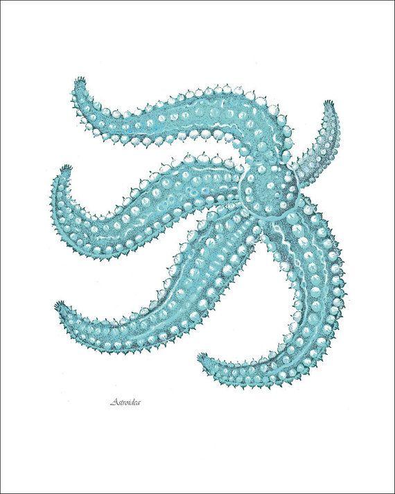 Starfish Print Turquoise Blue Sea Star Art by NoahsNauticalPrints