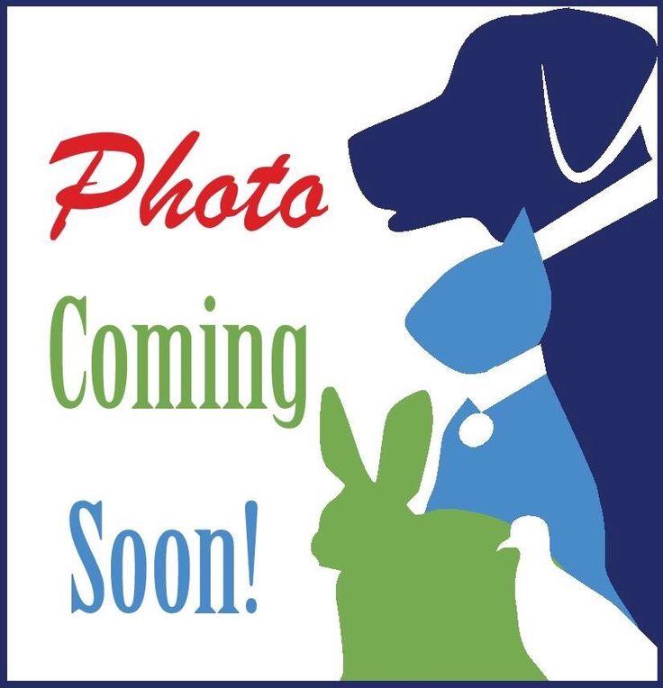 Treeing Walker Coonhound Dog For Adoption In Alexandria Va Adn 428408 On Puppyfinder Com Gender Female Age Adult Dog Adoption Beagle Dog Pitbull Terrier