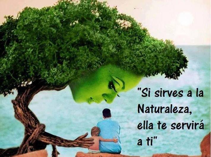 Frases De Amor Con Imagenes De Naturaleza: Naturaleza. Ecología. Frases - Buscar Con Google