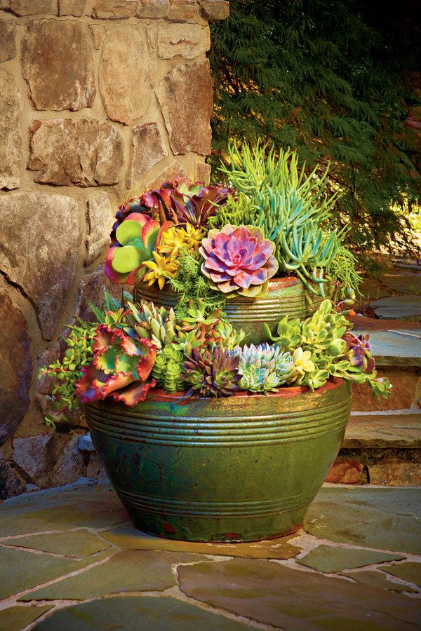 Forgiving succulents are both heat and drought tolerant, so they'll look great all summer long. Put them in a container to display on your patio!