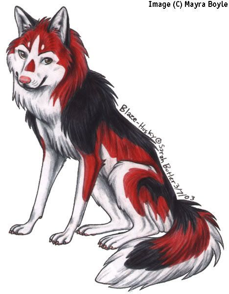 red white and black shewolf anime wolves pinterest