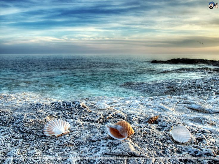 112 Best Beyond The Sea Images On Pinterest