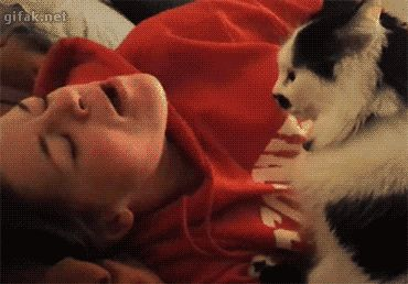 7 Best Cat Gifs of the Week - 9th July 2016 - We Love Cats and Kittens