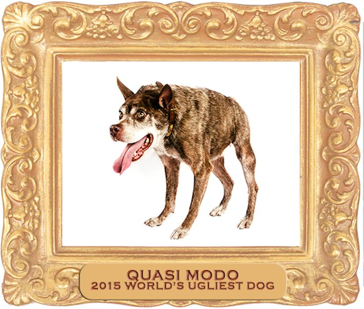 Quasi Modo, Short-Spined Dog Who Resembles a Hyena, Wins the 2015 World's Ugliest Dog Contest