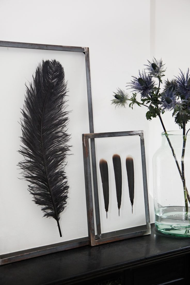 Struisvogeleieren en veren van een fazant voor in huis | roomed.nl