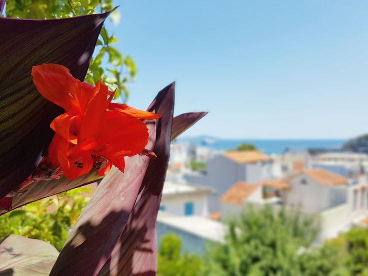 Mornings...here...🌊🏠📸 🌎 www.angelosalonissos.com #angelos_apartments #alonissos #sporades #greece #summer2017 #sea #view #sky #flowers #entrance