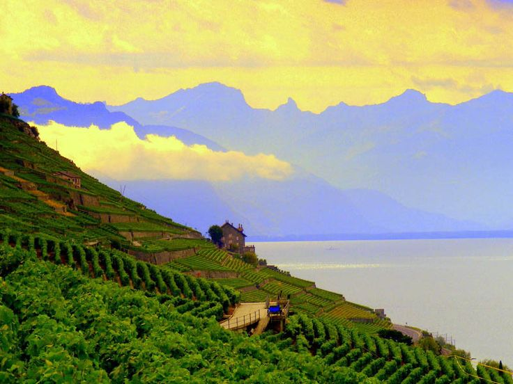 One of the most stunning vineyard locations in the world - Lavaux Vineyards #Switzerland  #winery #winemaking #winelovers #wine #vineyard