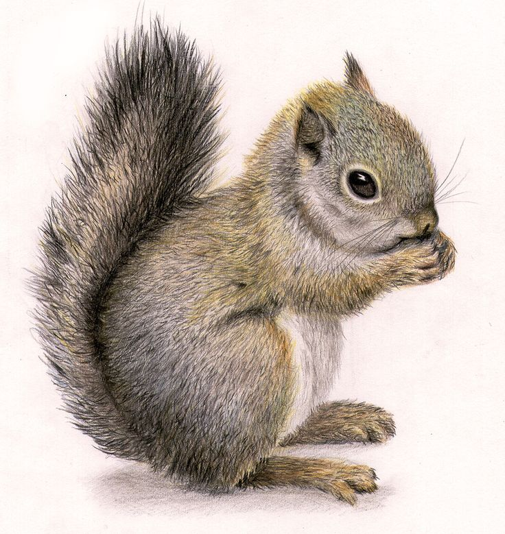Squirrel draw More