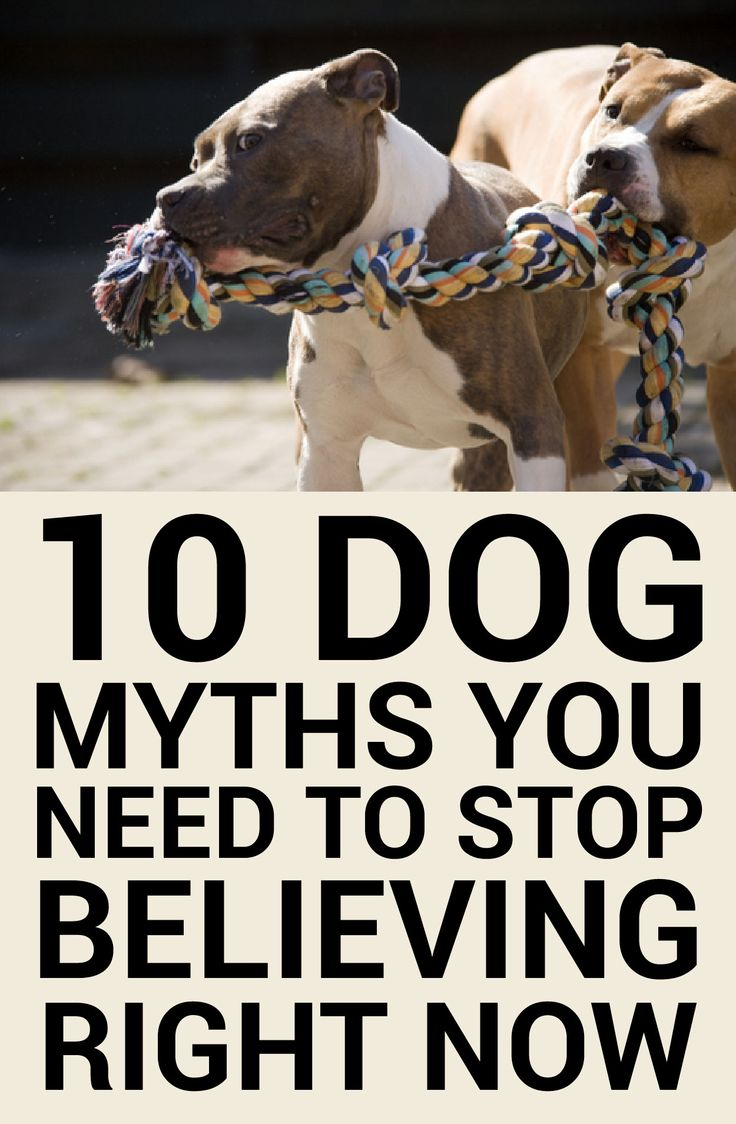 10 Dog myths you need to stop believing right now