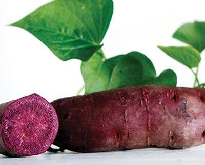 Purple sweet potato slips from Southern Exposure Seed Exchange   All Purple - 6 Slips
