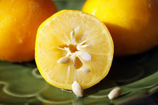 Faire pousser des citrons à partir de pépins