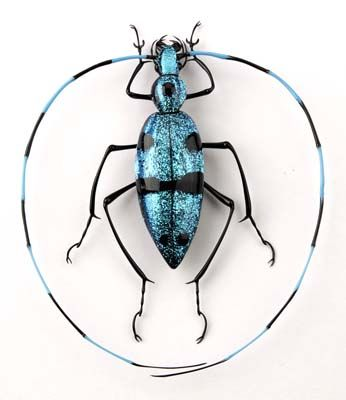 Emanuel Toffolo, glass bug, Lampworked Glass