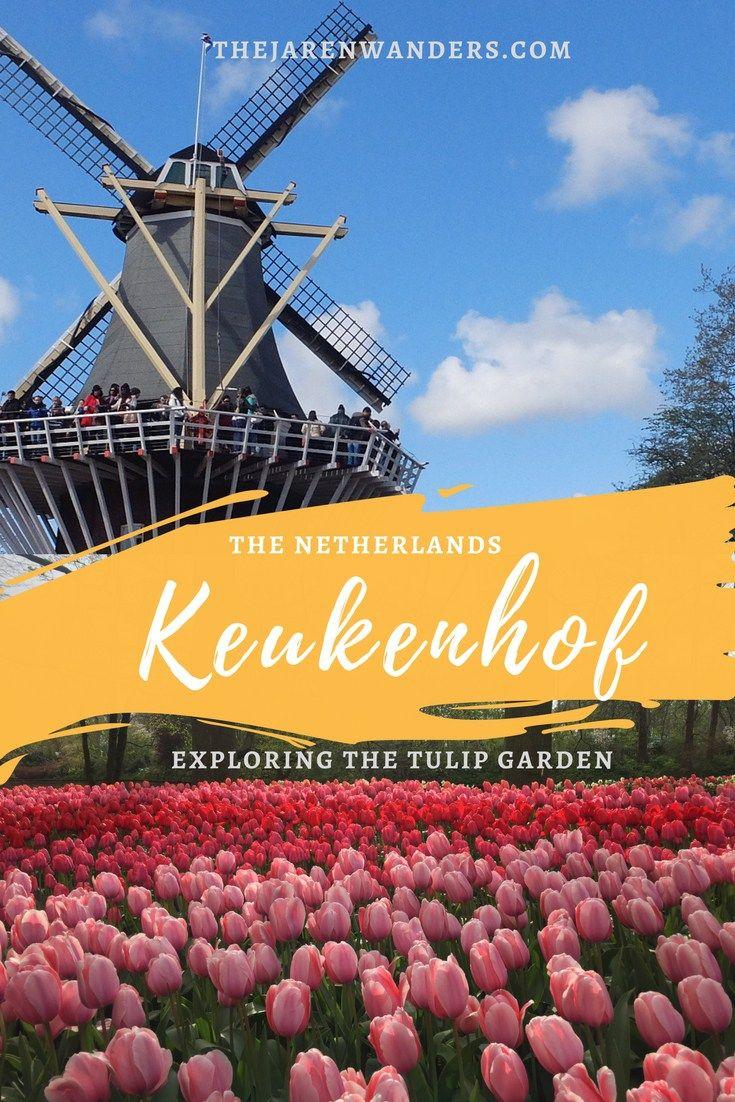 Exploring the tulip garden Keukenhof Netherlands 583