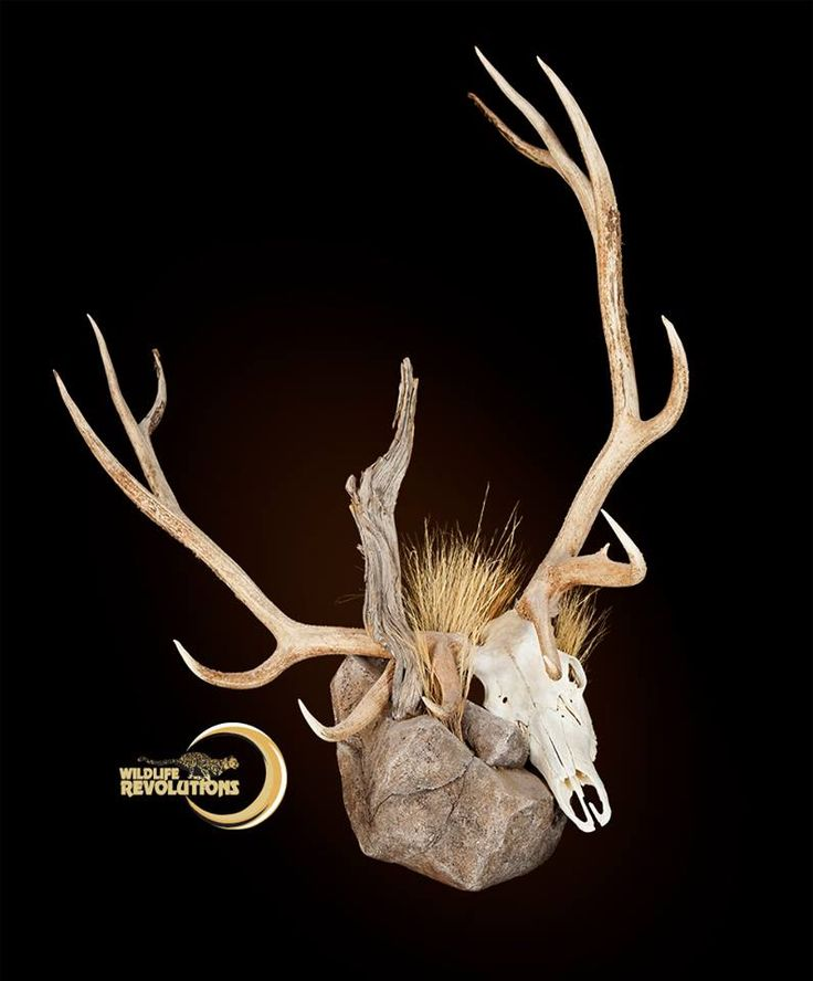 Elk mount fireplace - photo#48