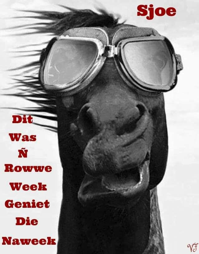 Rowwe week