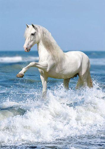 White horse in sea.