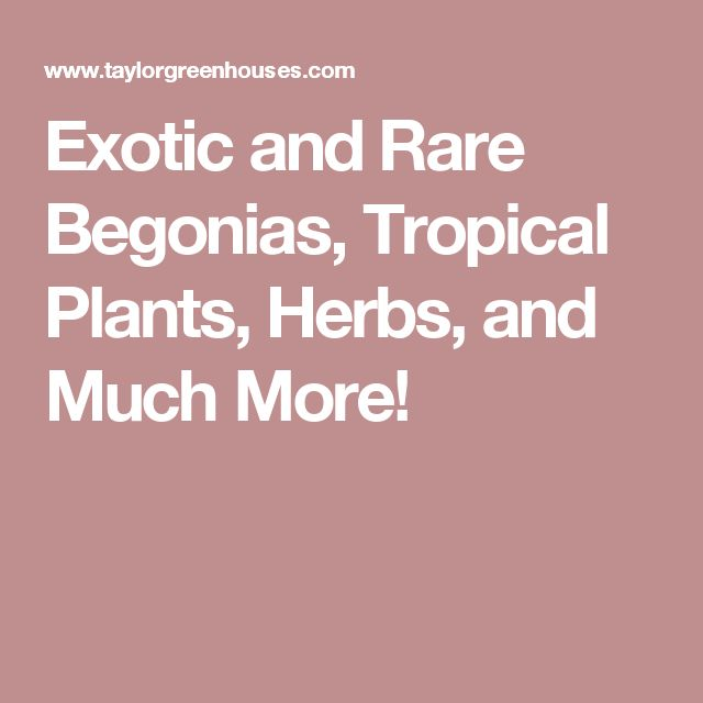 Taylogreenhouses Com Exotic And Rare Begonias Tropical Plants Herbuch More Plant Nurserytropical Plantsherbsonline