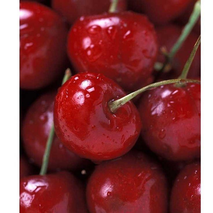 Bing Cherry Tree (Semi-dwarf) Trunk Size The vast …