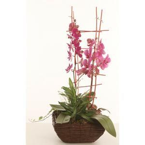 Centro Bali - Compuesto por dos orquídeas medianas con musgo, plantas y decorado con palos   Bourguignon Floristas #orchids #flowers
