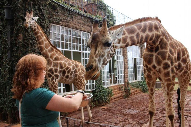 Giraffe Manor Кения/Найроби - TripAdvisor RU