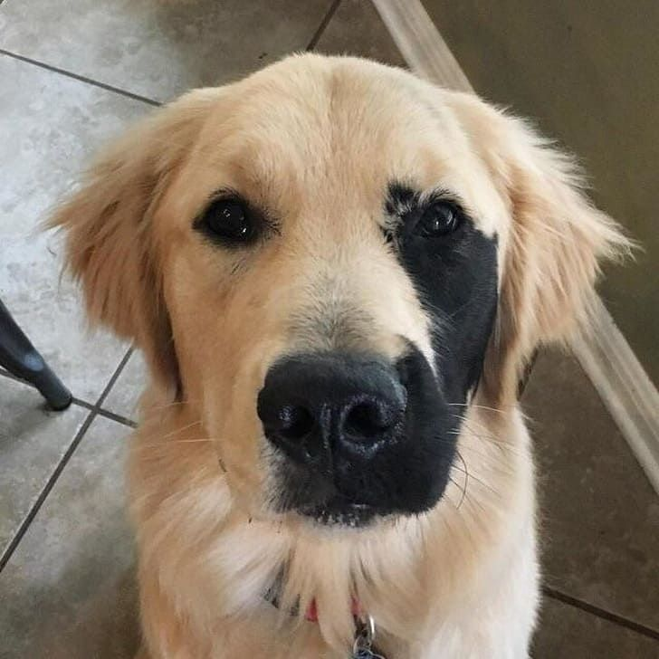 10+ Unusual And Unique Dogs That Deserve To Be Seen And Adored By The World