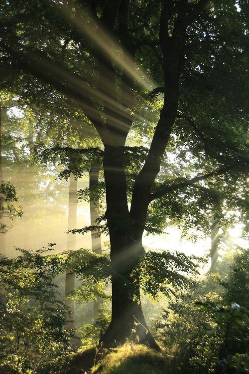 The Tree, Traumsturm