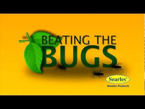 Learn how to 'beat the bugs' in your garden with a variety of products manufactured by Searles Garden Products, including Garden Insecticides, Natural Pyrethrum and White Oil in ready to easy spray bottles.  #www.searles.com.au #searles #bugs #insects #pests #deseases #products #insecticides #white oil #garden #products #australia