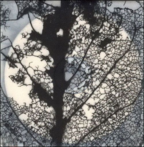 within MIRRORS     CONSTELLATIONS OF SPRING (2006)   WORKS BYPAUL CLIPSON